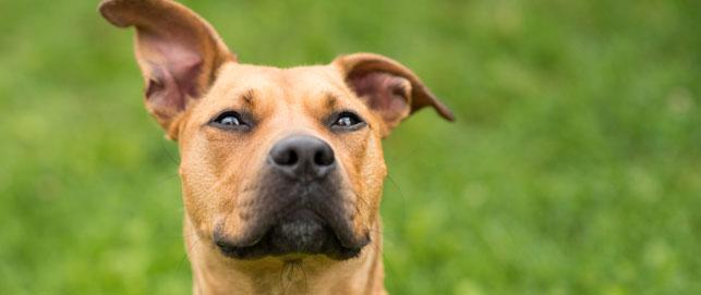 City of Brampton | Animal Services | Brampton Animal Services