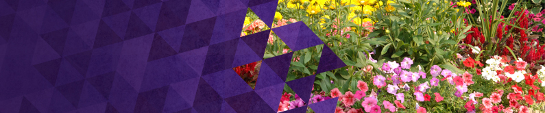 Flowers- Page Header Image