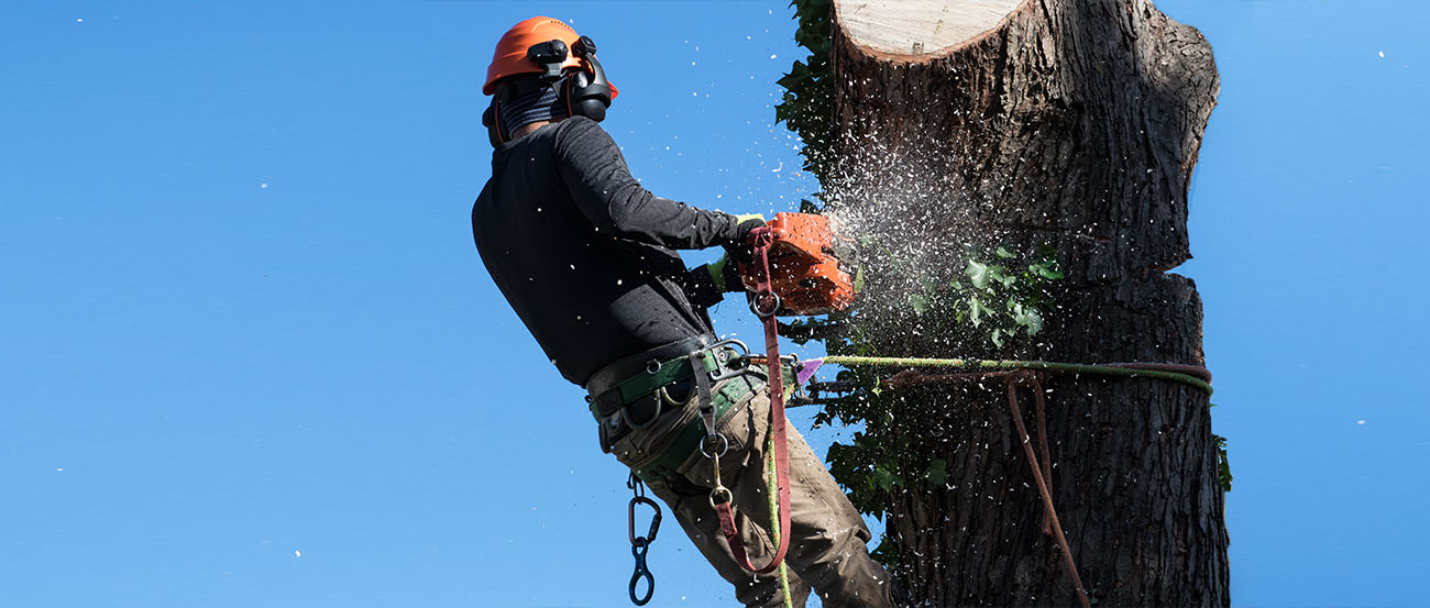 Person Cutting Limb from Tree