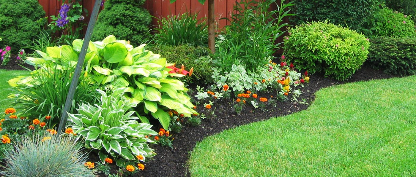 Page Banner - Photograph of Flower Bed